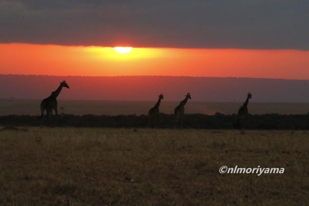 maasai-giraffe-sunset4